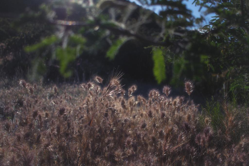 IMG_9010-Edit