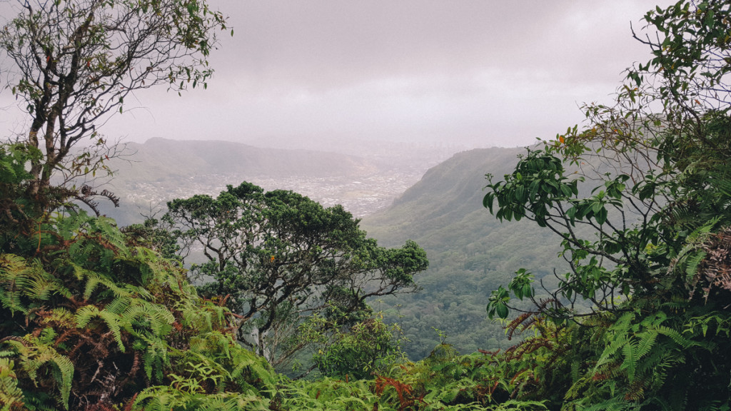 Manoa_to_Aihualama_Trail (13 of 21)