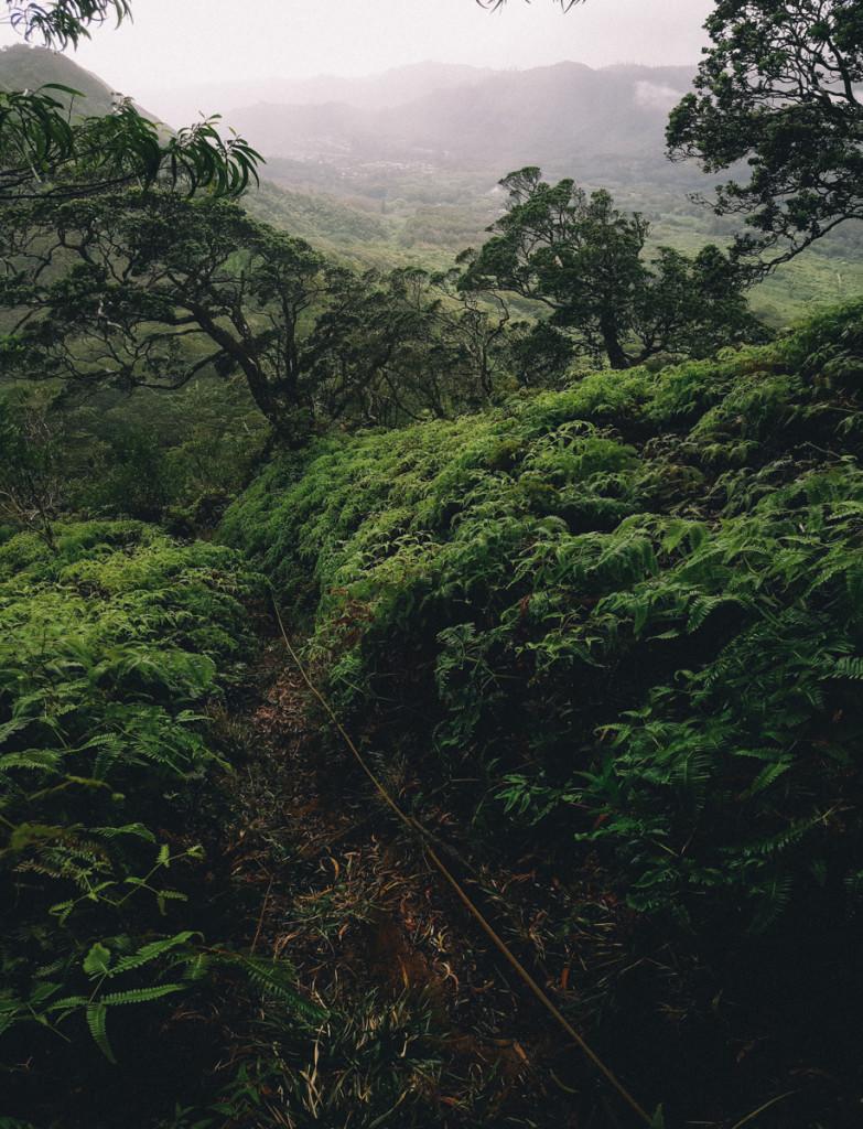 Manoa_to_Aihualama_Trail (20 of 21)