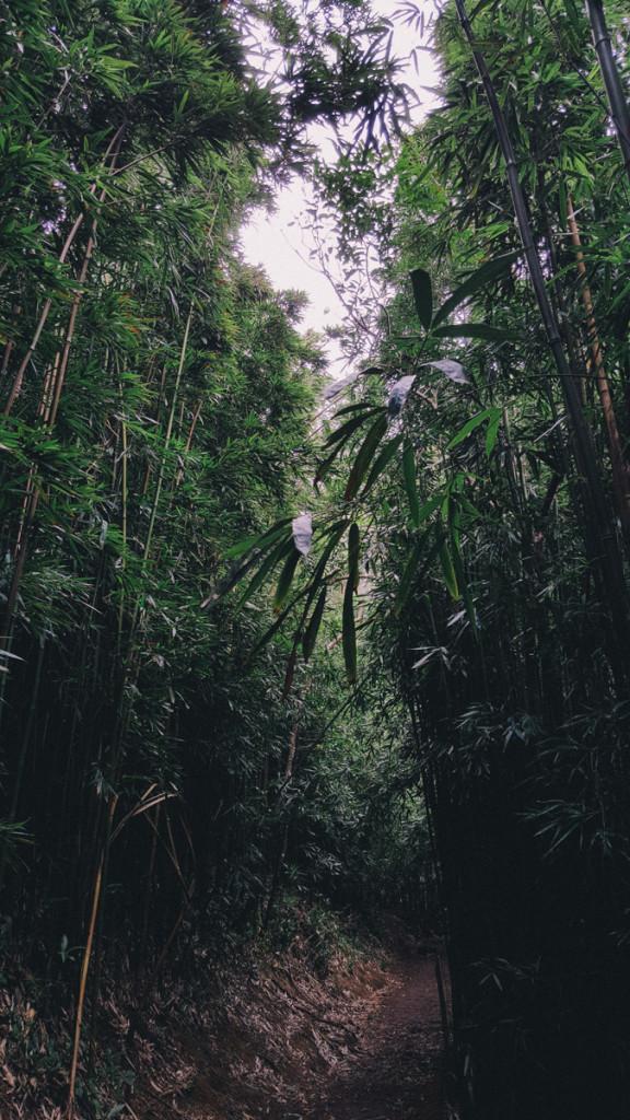 Manoa_to_Aihualama_Trail (6 of 21)