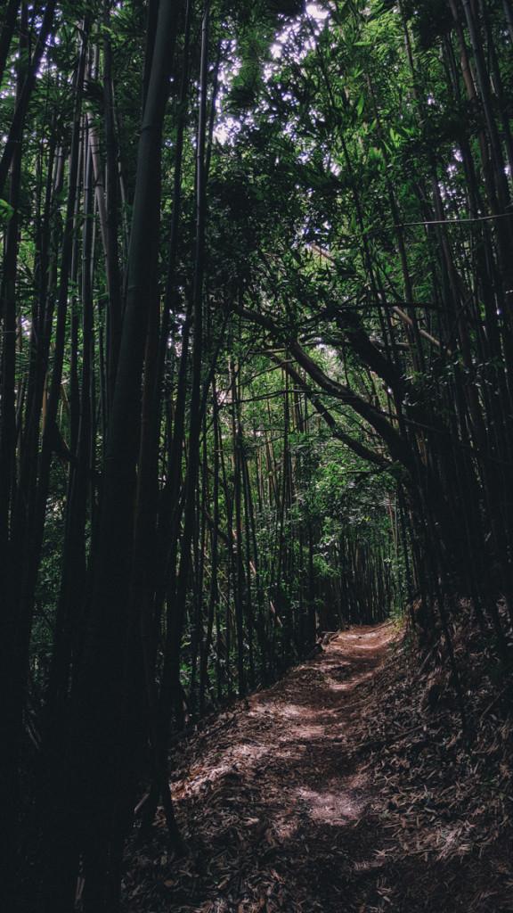 Manoa_to_Aihualama_Trail (7 of 21)