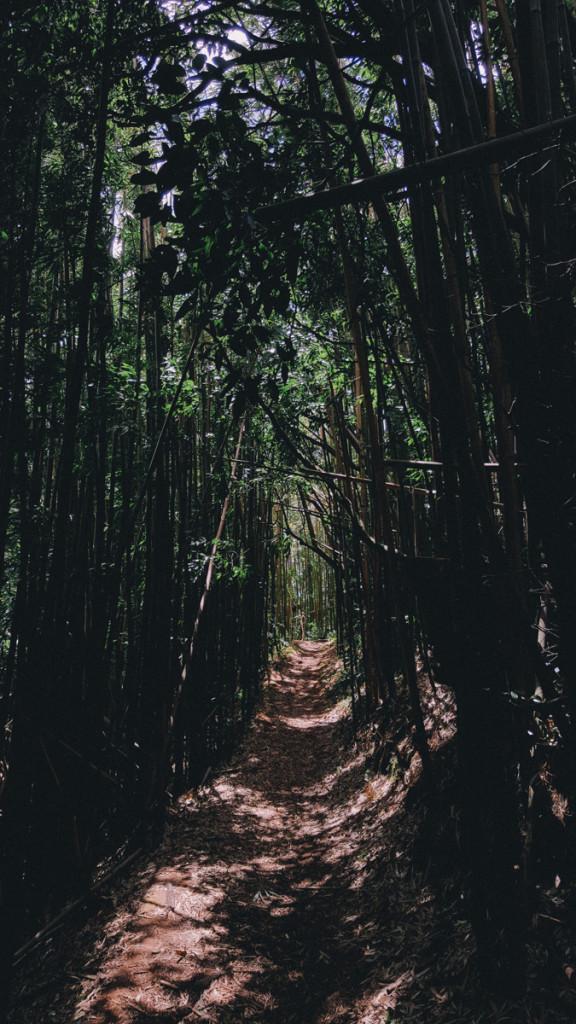 Manoa_to_Aihualama_Trail (8 of 21)