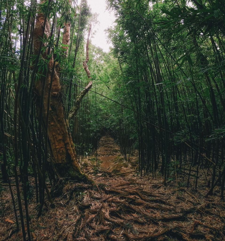 Manoa_to_Aihualama_Trail (9 of 21)