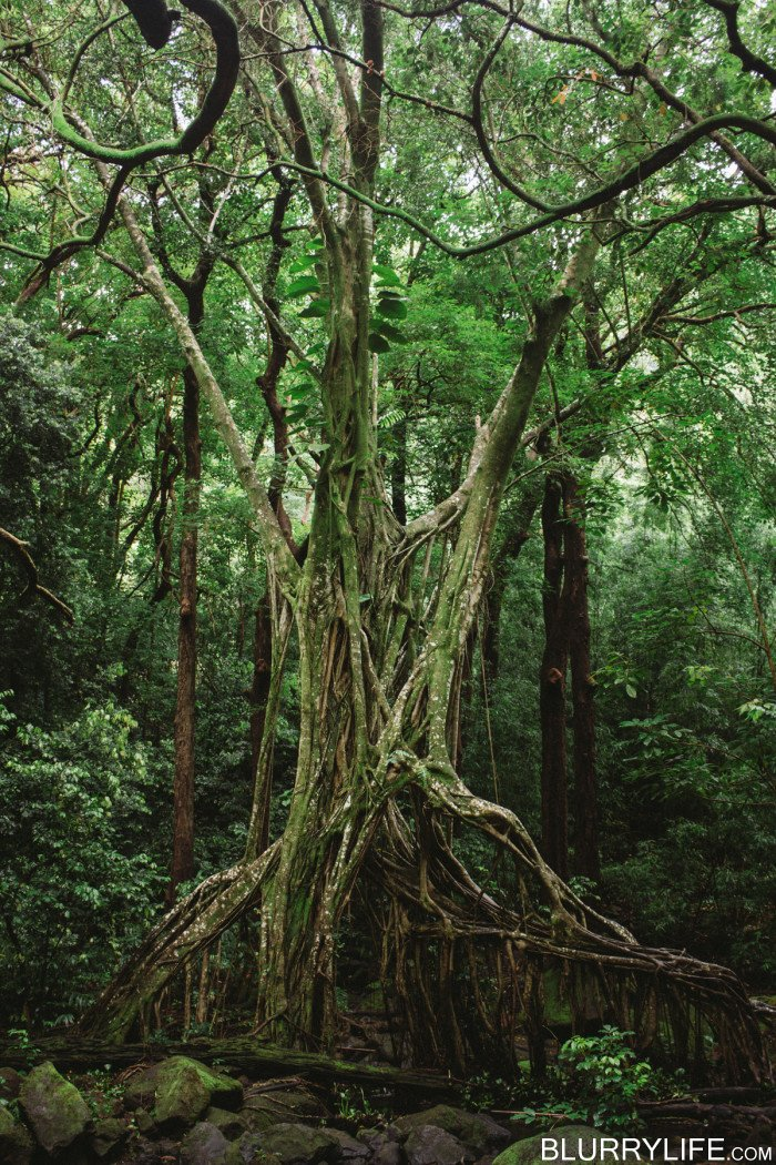 judd_trail_nuuanu_valley_oahu_hawaii-14