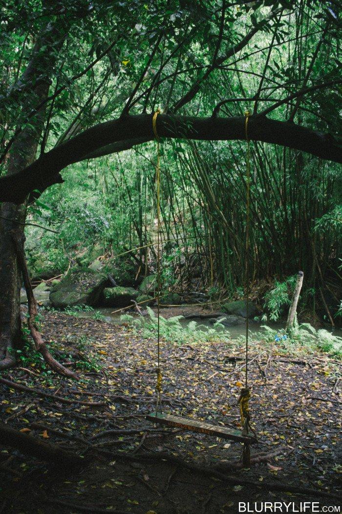 judd_trail_nuuanu_valley_oahu_hawaii-19