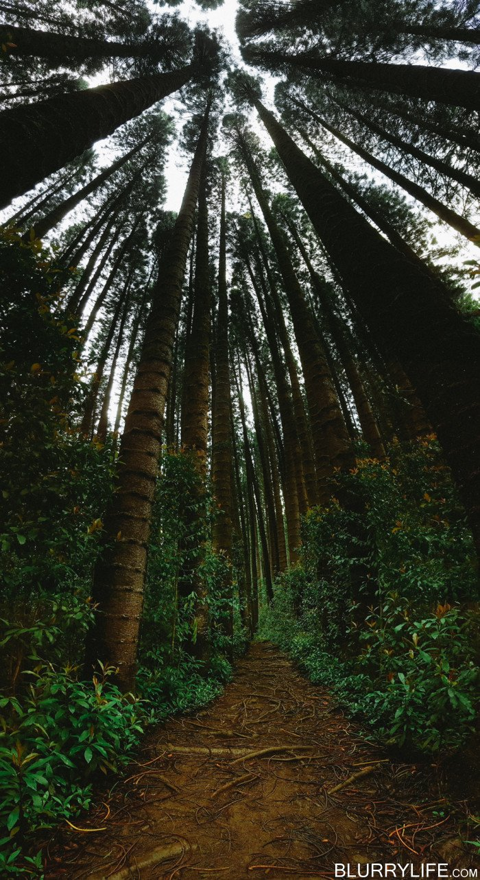 judd_trail_nuuanu_valley_oahu_hawaii-2
