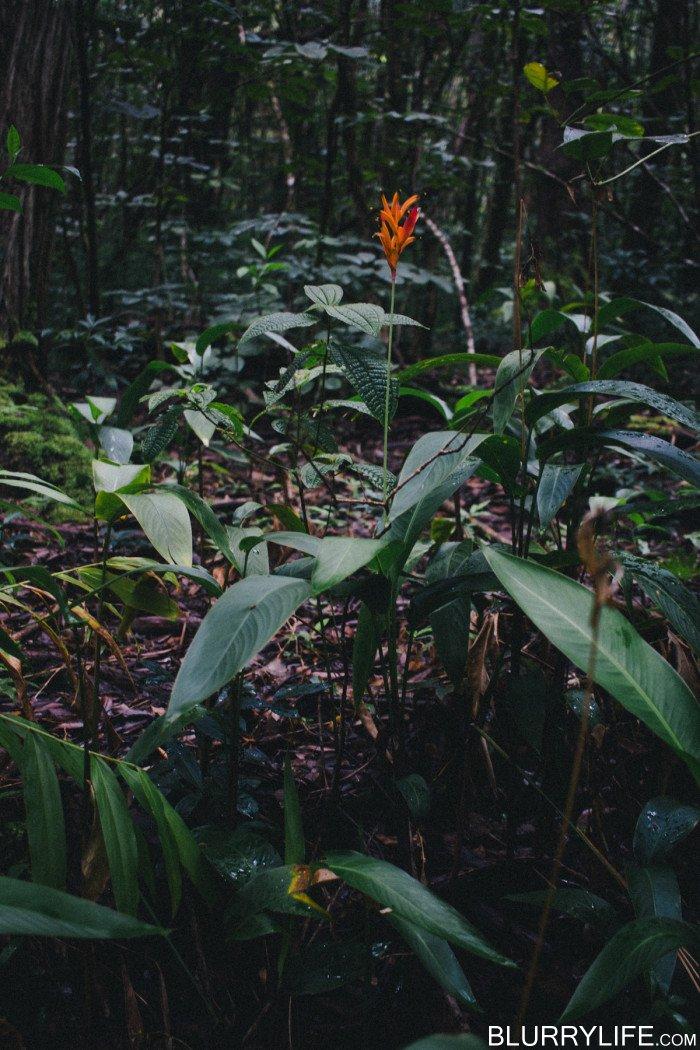 judd_trail_nuuanu_valley_oahu_hawaii-25