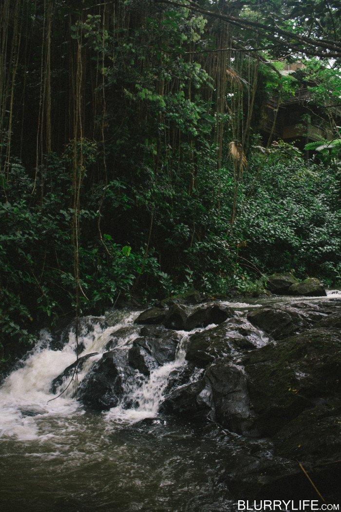 judd_trail_nuuanu_valley_oahu_hawaii-30