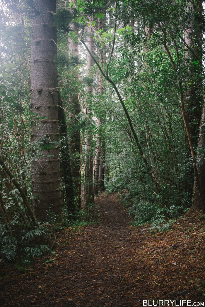 judd_trail_nuuanu_valley_oahu_hawaii-31