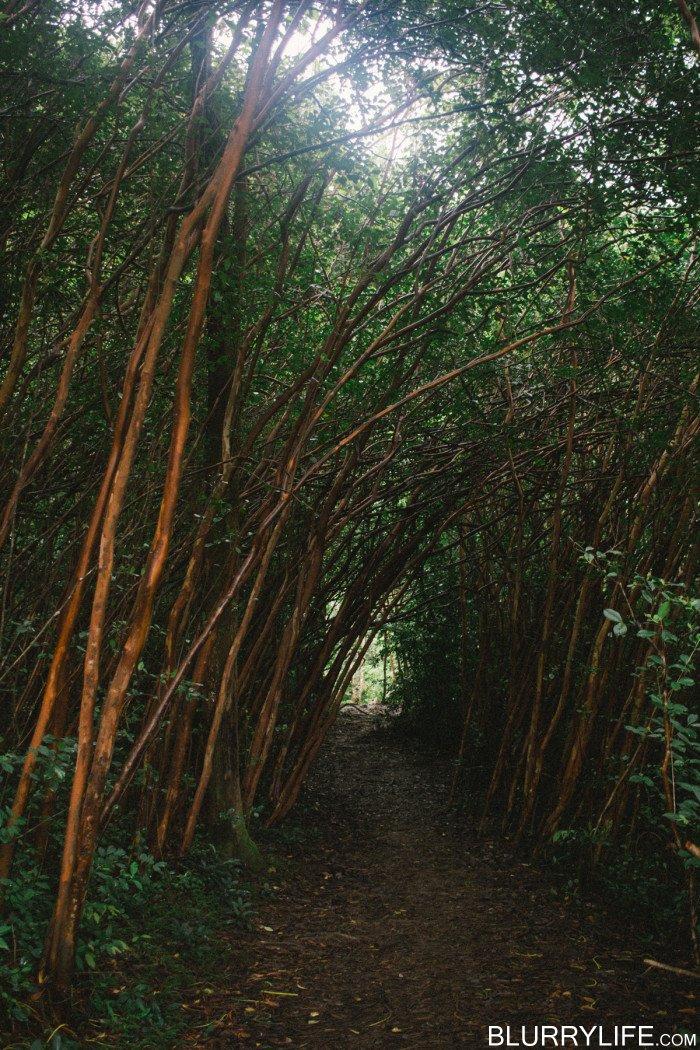 judd_trail_nuuanu_valley_oahu_hawaii-35