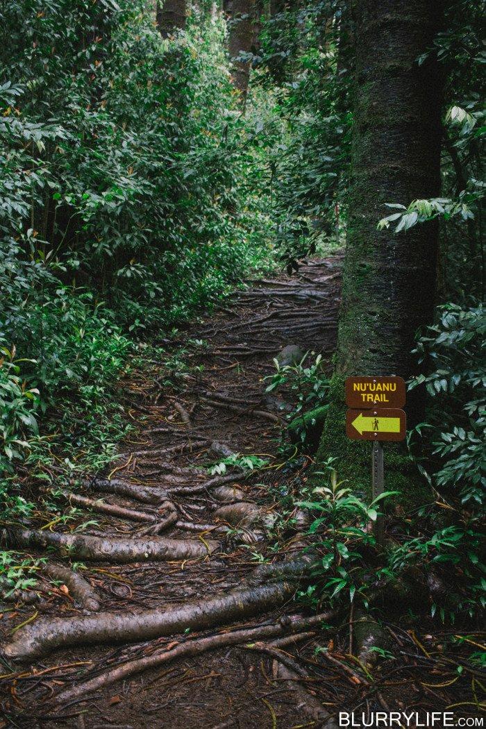 judd_trail_nuuanu_valley_oahu_hawaii-39