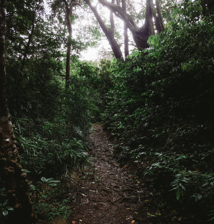 judd_trail_nuuanu_valley_oahu_hawaii-4