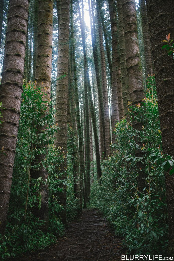 judd_trail_nuuanu_valley_oahu_hawaii-41