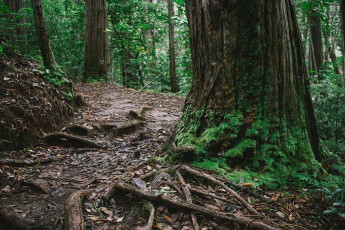 judd_trail_nuuanu_valley_oahu_hawaii-45