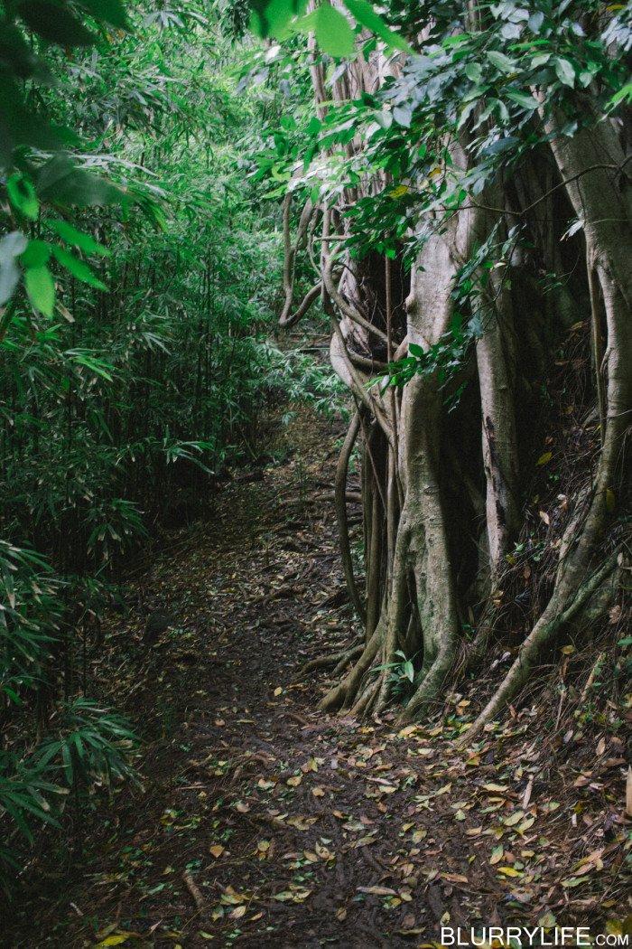 judd_trail_nuuanu_valley_oahu_hawaii-46