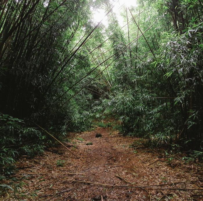 judd_trail_nuuanu_valley_oahu_hawaii-5