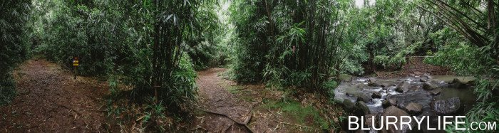 judd_trail_nuuanu_valley_oahu_hawaii-6