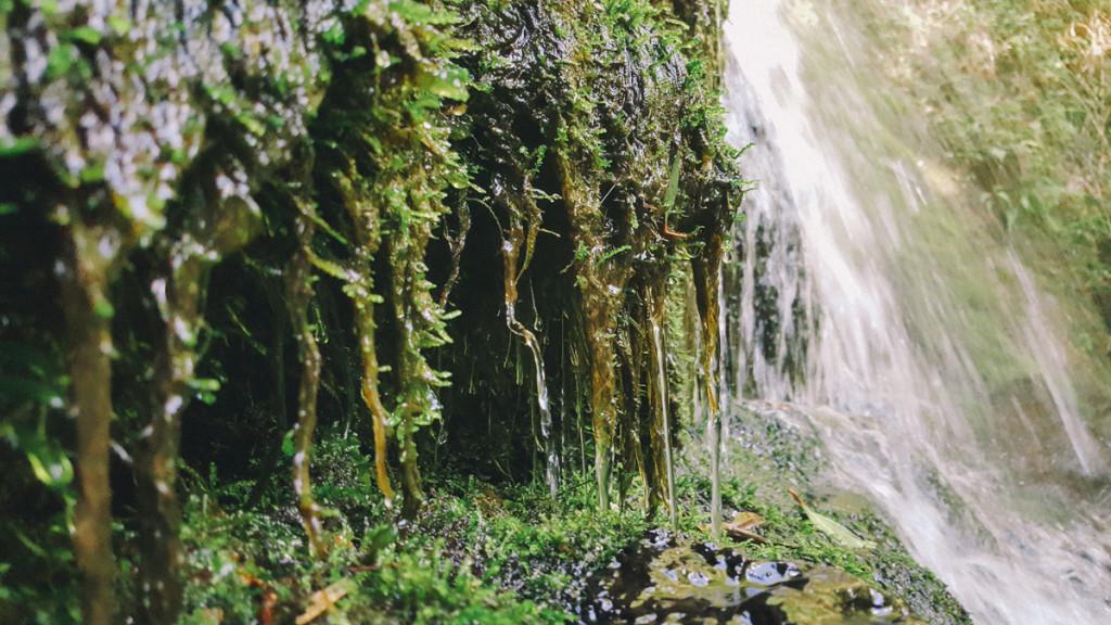 lulumahu_falls_trail_oahu (12 of 25)