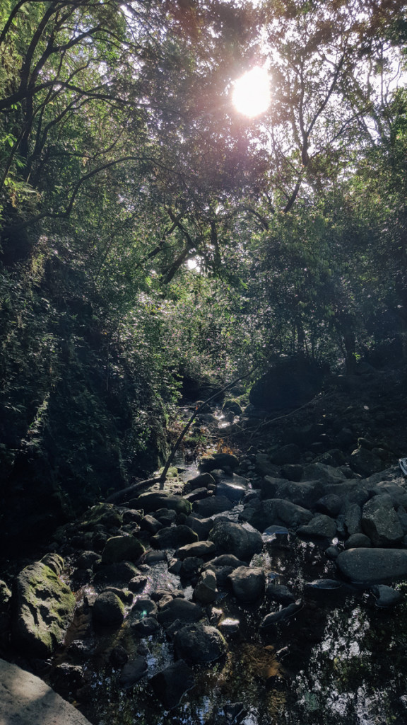 lulumahu_falls_trail_oahu (16 of 25)