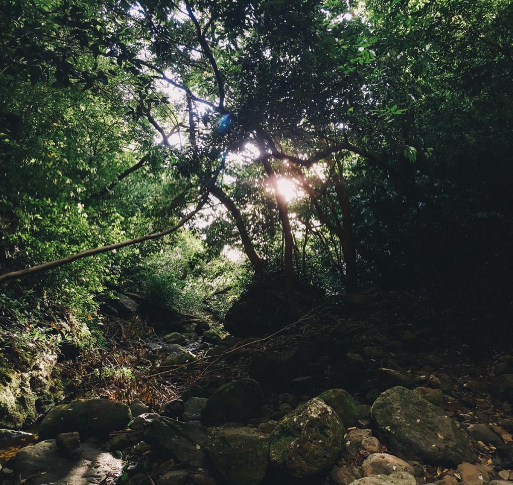 lulumahu_falls_trail_oahu (19 of 25)