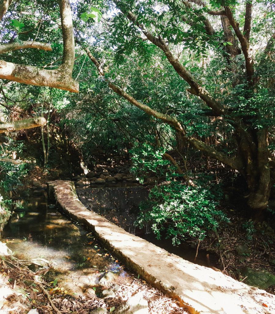 lulumahu_falls_trail_oahu (6 of 25)