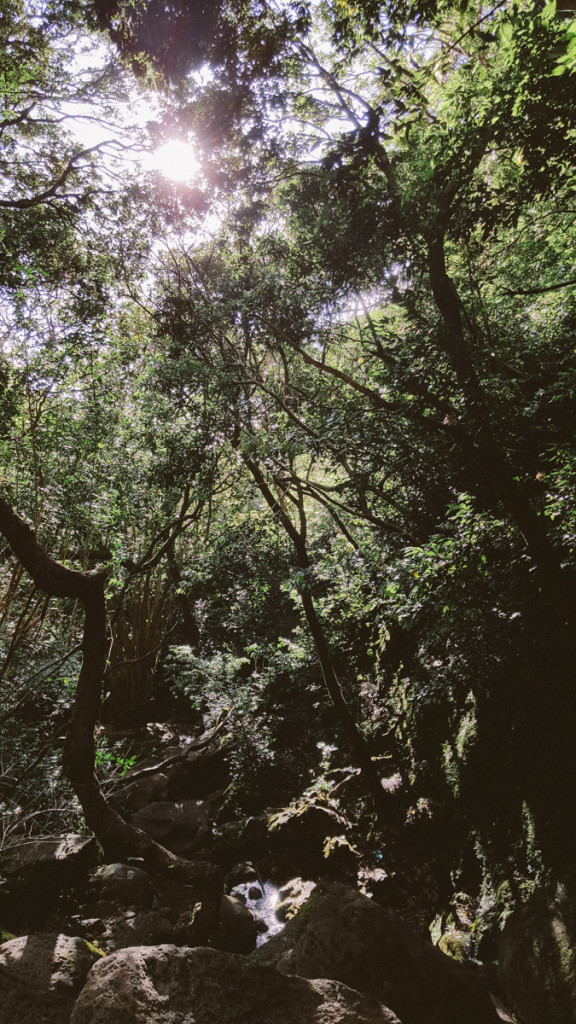 lulumahu_falls_trail_oahu (9 of 25)