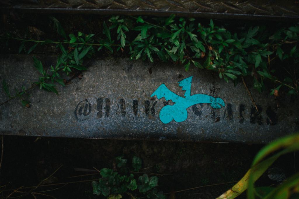 stairway_to_heaven_haiku_stairs_hike_oahu (22 of 57)
