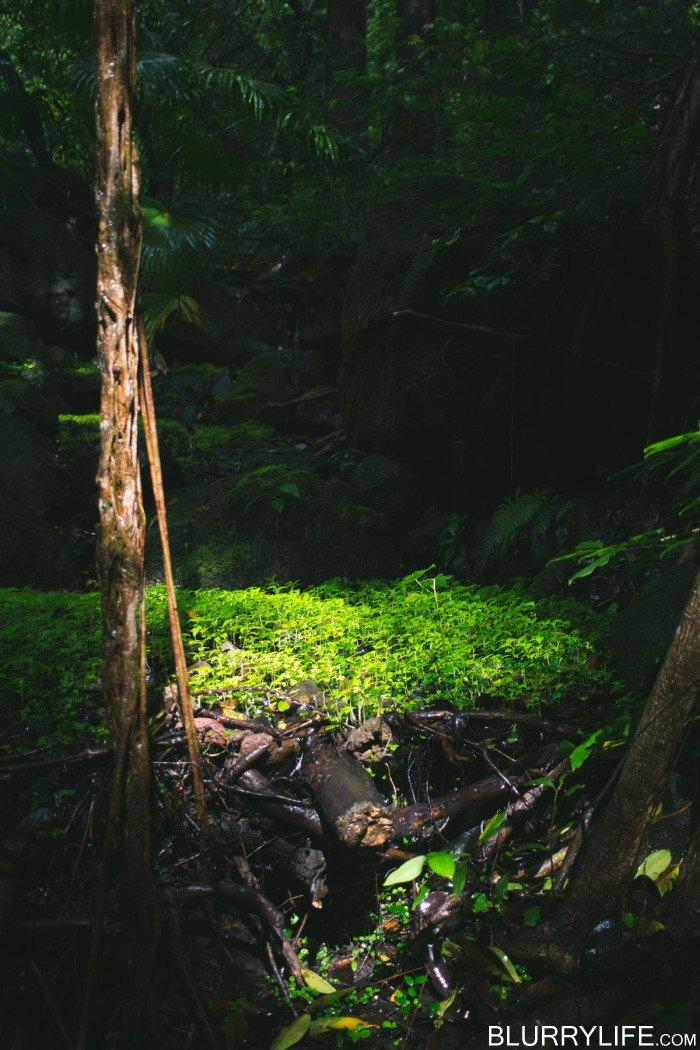 luakah_falls_oahu_hawaii-11