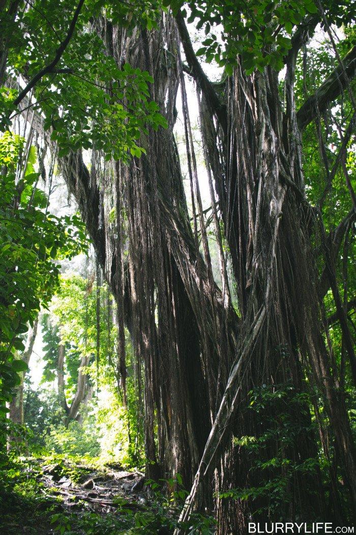luakah_falls_oahu_hawaii-5