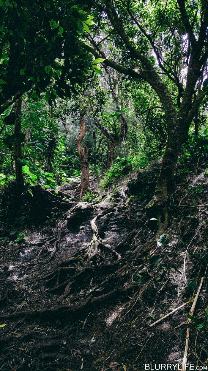 pali_puka_hike_oahu_hawaii-34