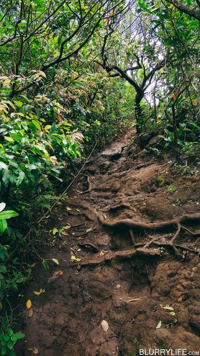 pali_puka_hike_oahu_hawaii-39