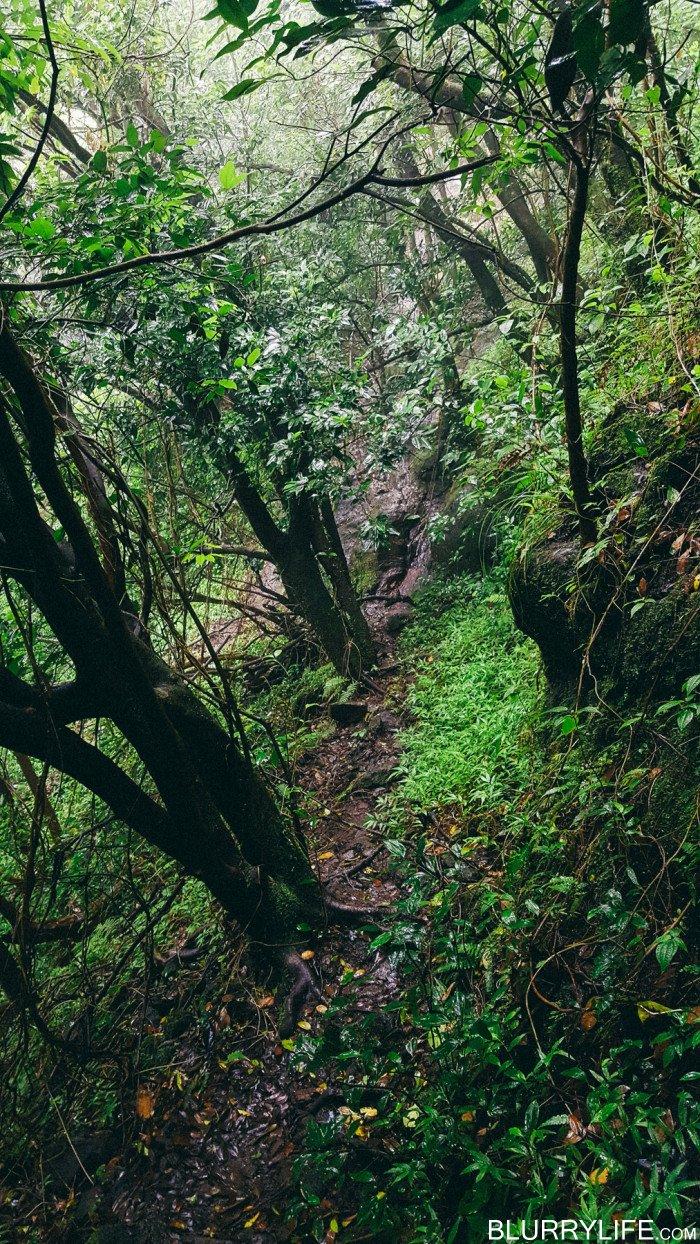waipuhia_mountain_beyond_pali_puka_hike_oahu_hawaii-12