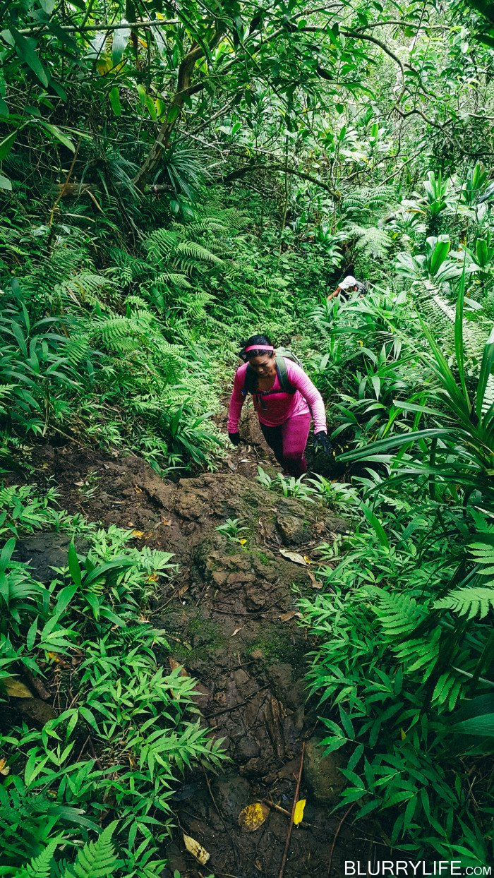 Ka'au_Crater_to_Mt_Olympus_Oahu_Hawaii-17