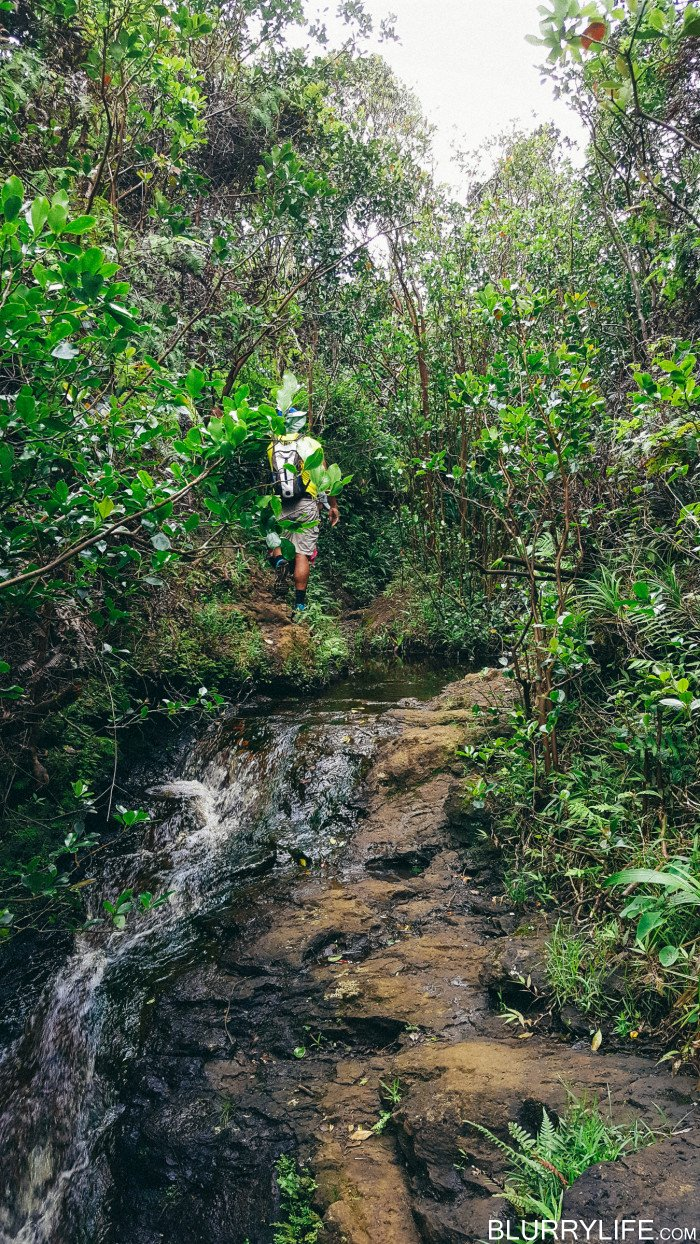 Ka'au_Crater_to_Mt_Olympus_Oahu_Hawaii-23