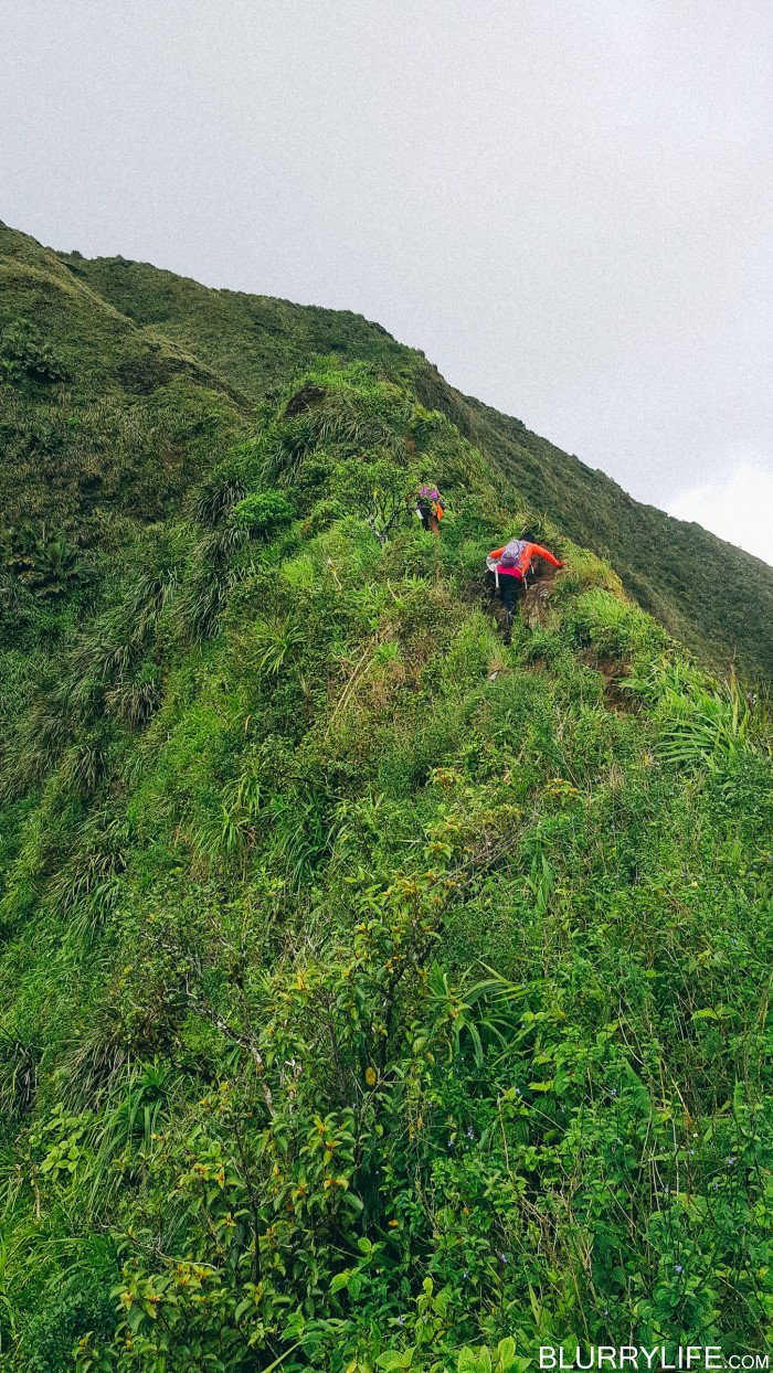 Ka'au_Crater_to_Mt_Olympus_Oahu_Hawaii-35