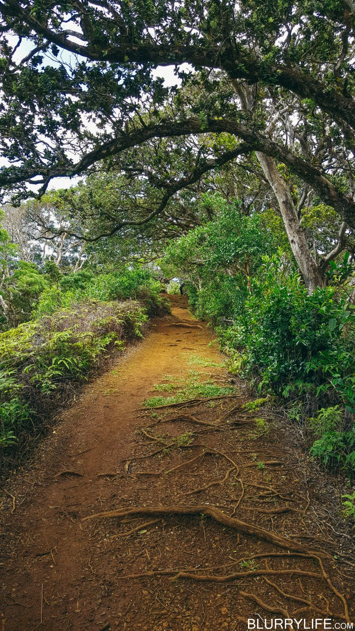 Ka'au_Crater_to_Mt_Olympus_Oahu_Hawaii-48