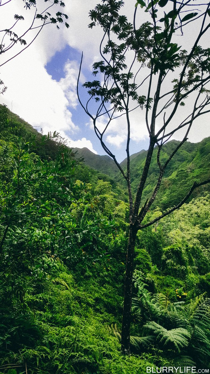 Ka'au_Crater_to_Mt_Olympus_Oahu_Hawaii-7