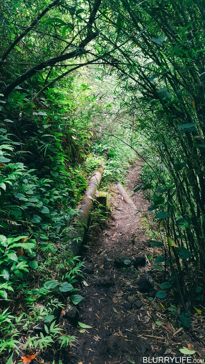 Ka'au_Crater_to_Mt_Olympus_Oahu_Hawaii-8