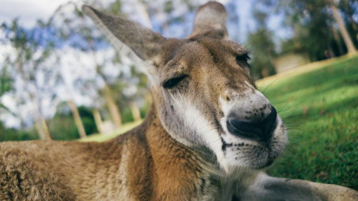 australia_trip_brisbane-26