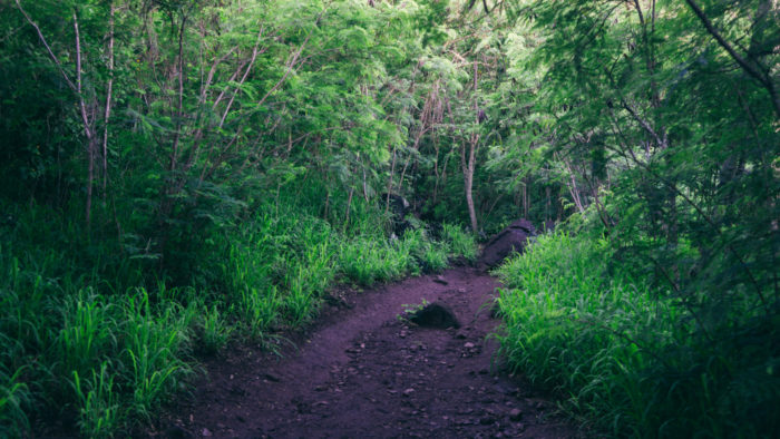 Wainae_ridge_trail_to_kaena_point-3
