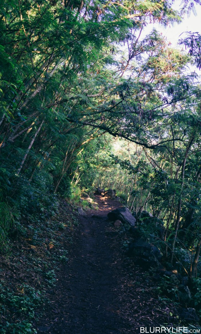 Wainae_ridge_trail_to_kaena_point-4
