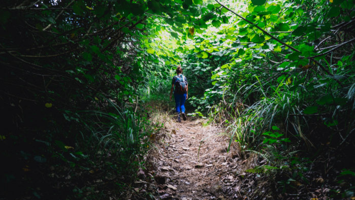moanalua_ridge_to_stairway_to_heaven-2