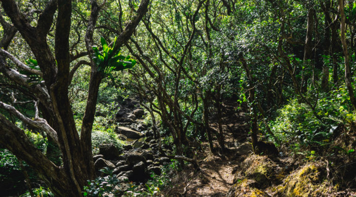 moanalua_ridge_to_stairway_to_heaven-4