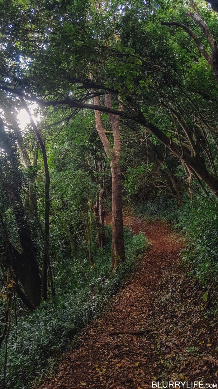nuuanu_pali_bushwacking_up_to_the_manoa_ridge_trail-37