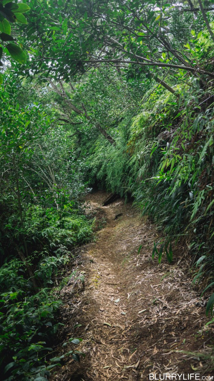 nuuanu_pali_bushwacking_up_to_the_manoa_ridge_trail-8