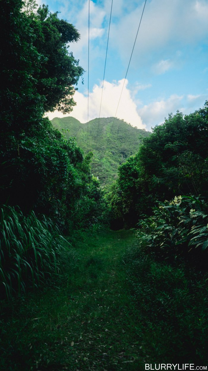 nuuanu_pali_reservoir_nature_walk-4